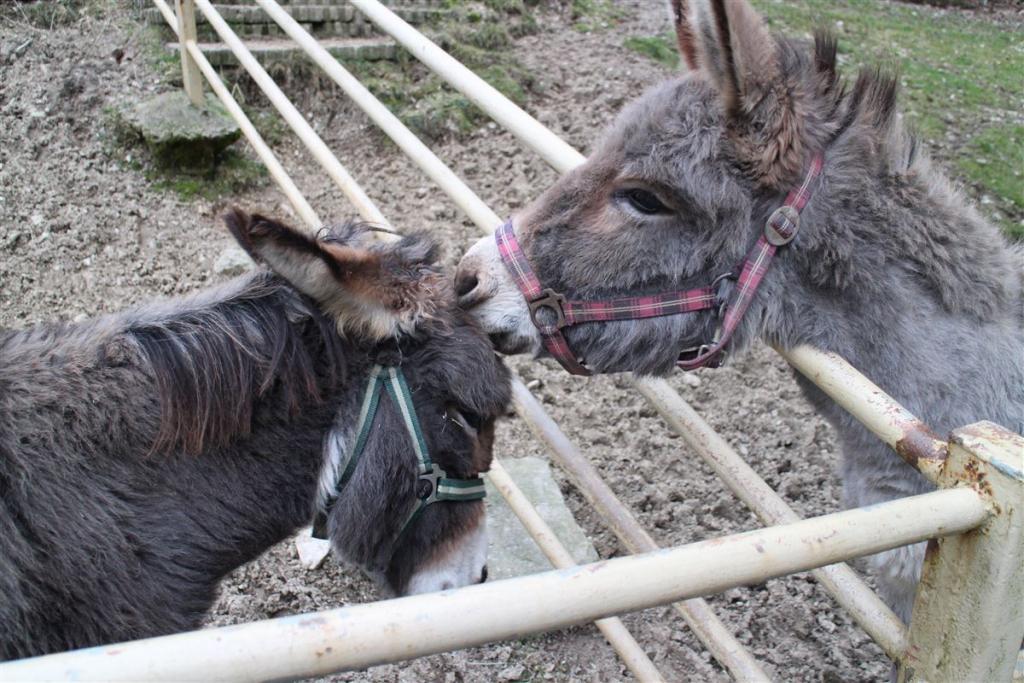 Ausflug in Klingenthal Sachsen - Vogtland - Der Tierpark