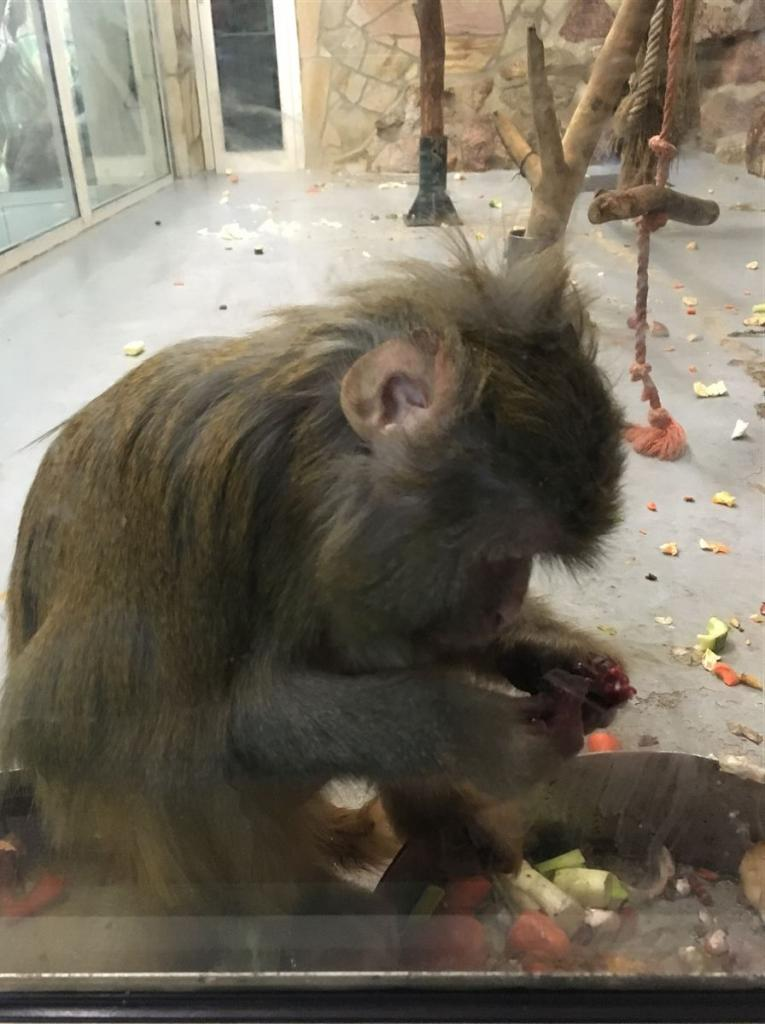 Ausflugsziel für die ganze Familie in Klingenthal Sachsen - Vogtland - Der Tierpark - Affe