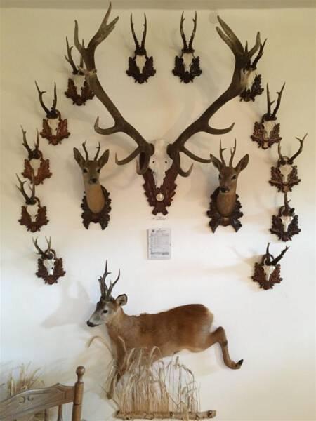 Ausflugstipp - Schloss Leubnitz - Vogtland - Sachsen - Natur und Jagd - Dauerausstellung