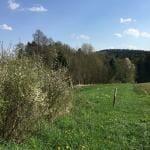 Wanderung durchs Burgsteingebiet