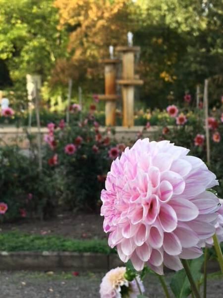 """Der Brunnen """"Dahlie"""" im Dahliengarten in Gera von Thilo Schoder"""