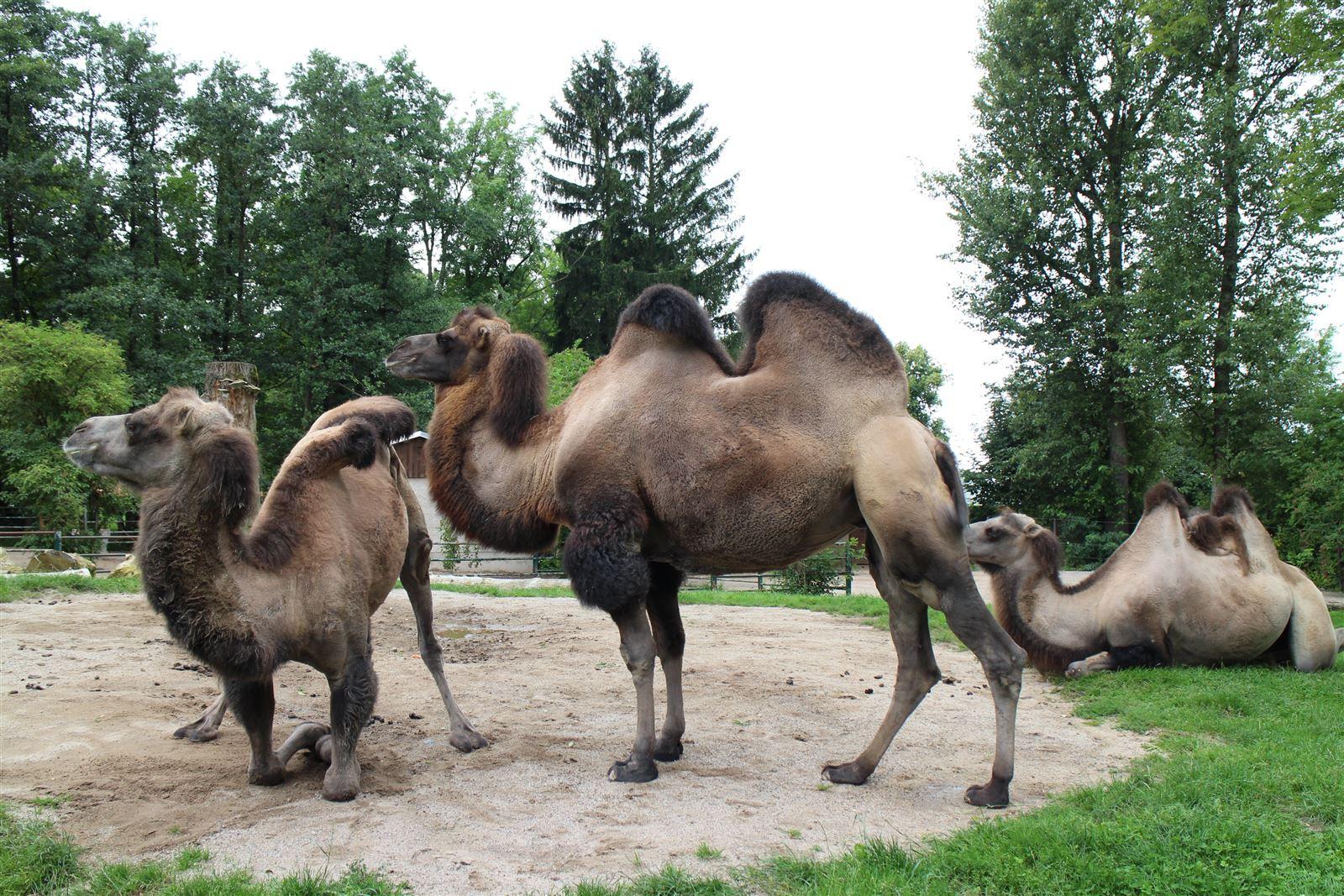 Ausflug mit Kindern - im Tierpark Falkenstein in Sachsen