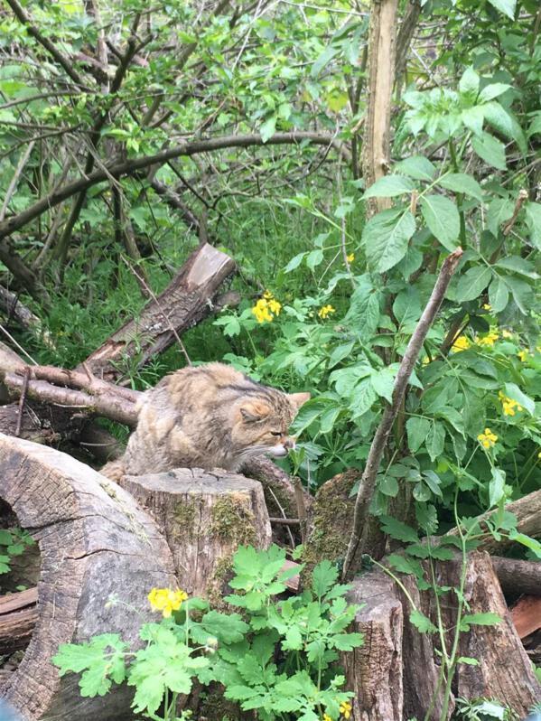 Wildkatzenfütterung im Pfaffengut in Plauen